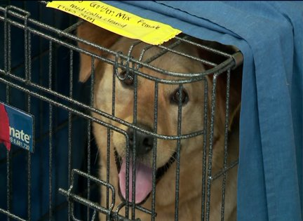 Pets from tornado-torn Oklahoma seek homes in Chicago
