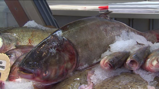 Who is eating Asian carp?
