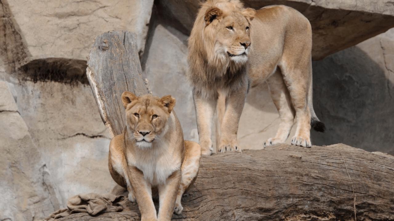 COVID-19: Wie der Brookfield Zoo ist der Umgang mit den Herausforderungen der Pandemie