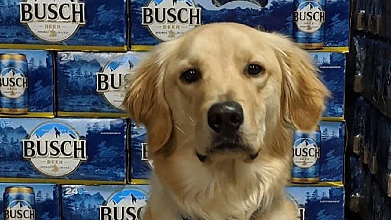 Busch gibt 3 Monate im Wert von Bier zu Menschen, die ergreifen oder zu fördern, einen Hund während der coronavirus-Krise