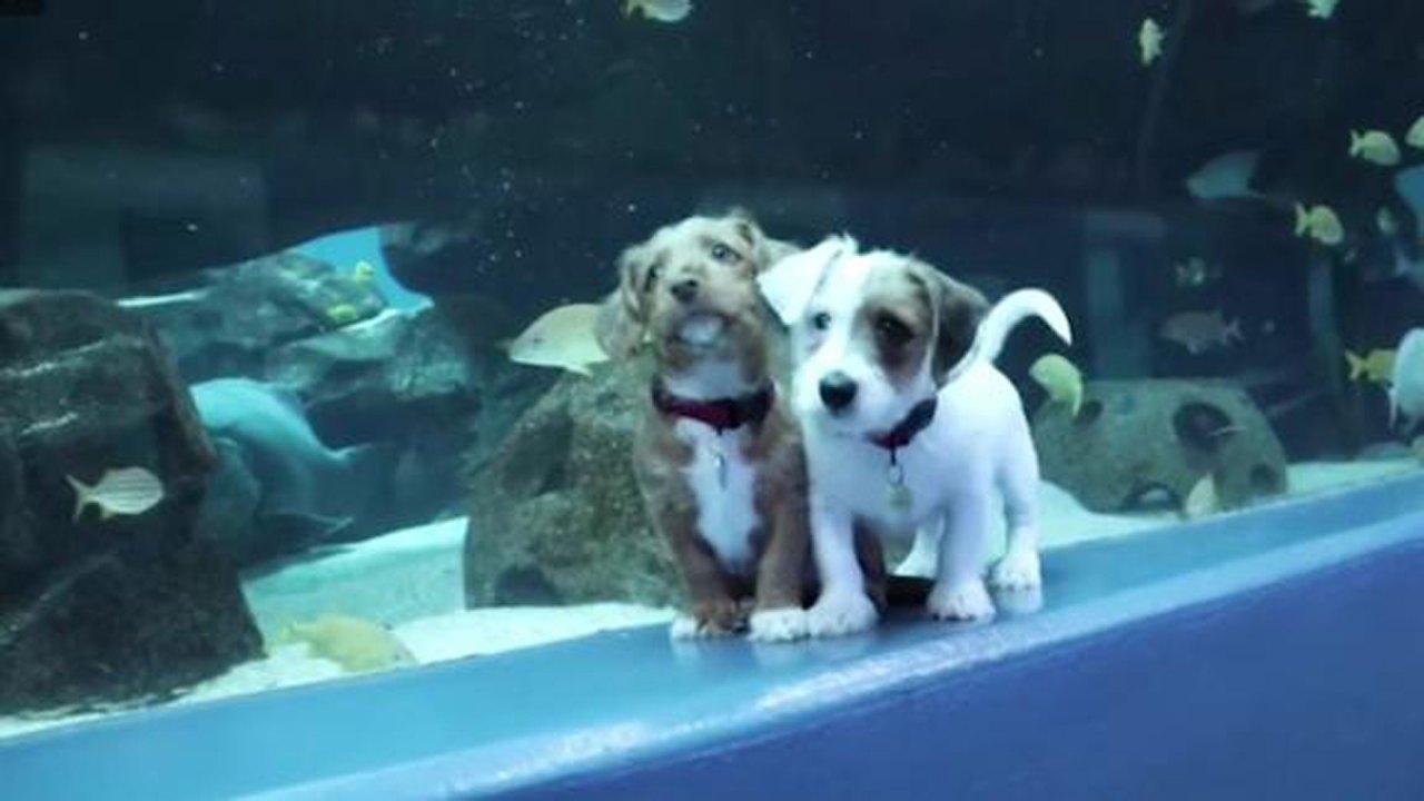 Georgia Aquarium menyambut penampungan anjing sementara itu ditutup