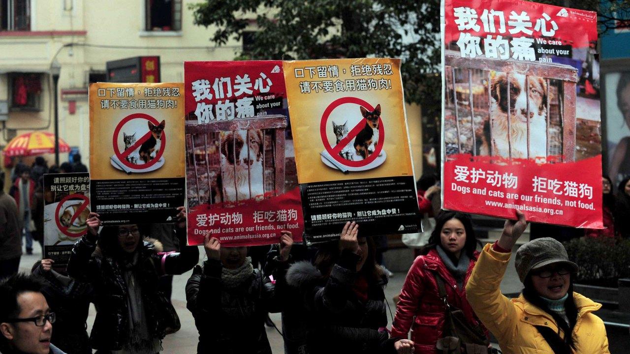 Shenzhen menjadi kota Cina untuk melarang konsumsi kucing dan anjing