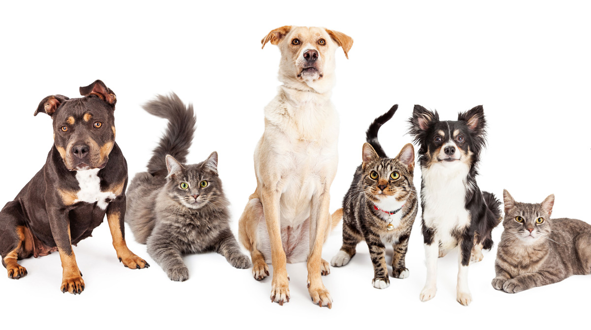 Top Dog Cat Names Of 2020 Include Coronavirus Related Monikers Wgn Tv